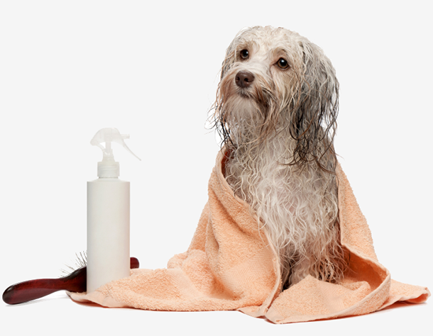 Woof wash mobile dog grooming vancouver west vancouver north complete solutioingenieria Choice Image